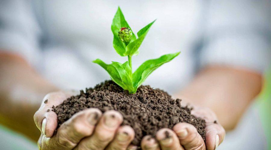 Earth Day, Earth Life